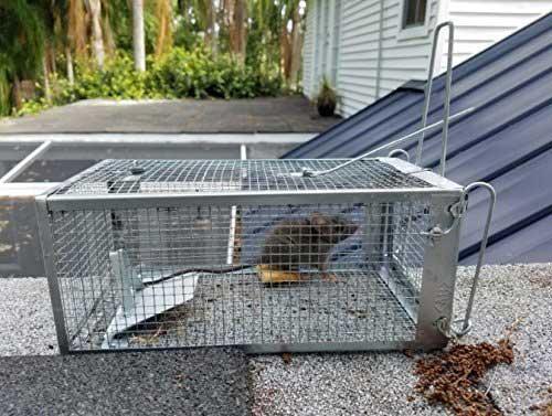 AB Traps Humane Rat Trap
