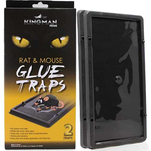 kingman prime rat glue trap
