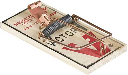 victor metal pedal mouse trap to get rid of mice
