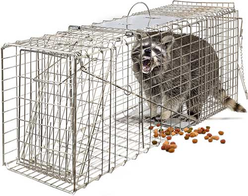 oxgord groundhog live trap