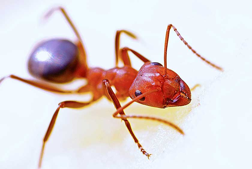 best-ant-killers