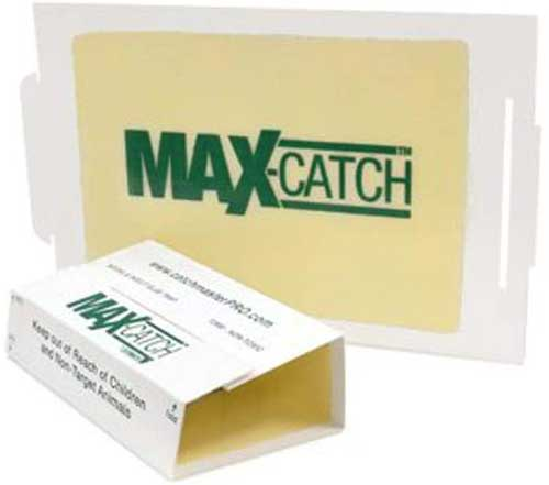 max catch insect glue trap
