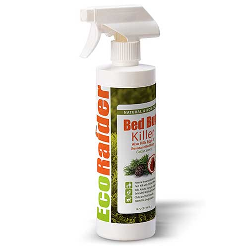 ecoraider bed bug killer spray